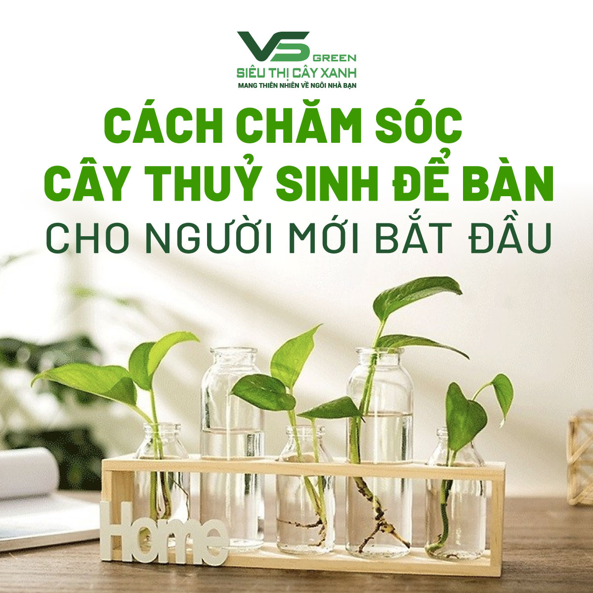 meo-cham-soc-cay-canh-thuy-sinh-de-ban